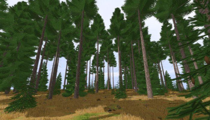 Fichtenwald 3D Modell kaufen