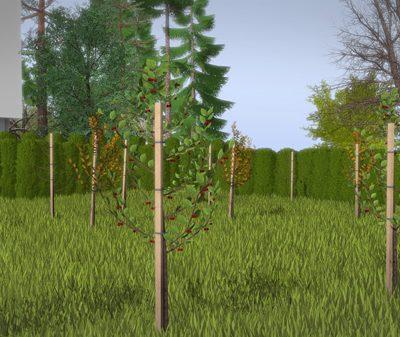 Hochdetailliertes 3D-Baum-Modell Kirsche mit Texturen und Materialien.