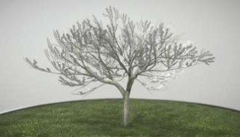 Hochdetailliertes 3D-Baum-Modell: Pflaume im Frühling in verschiedenen Größen, mit Texturen und Materialien