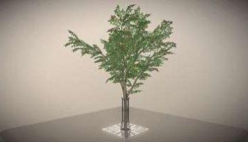 Neue 3D-Bäume Kollektion: Eberesche im Sommer